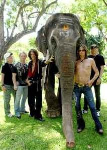 PETA <3 Aerosmith <3 Elephant