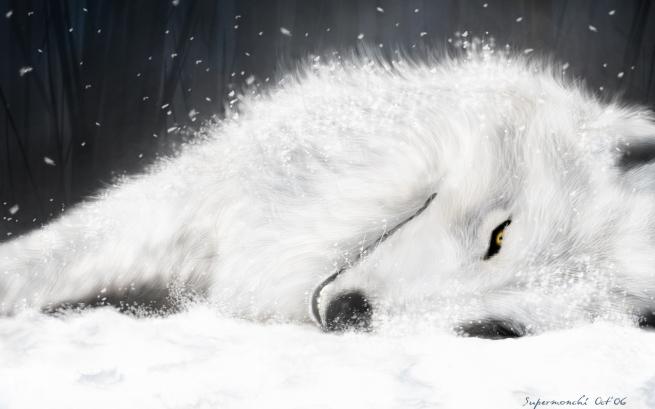 kiba-in-the-snow1